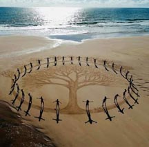 a circle in the sand around a Mother tree